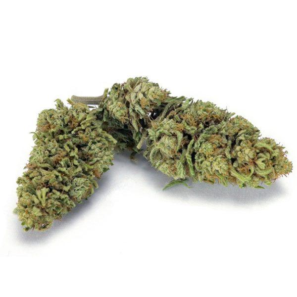 Mother CBG Cannabis CBD Flower